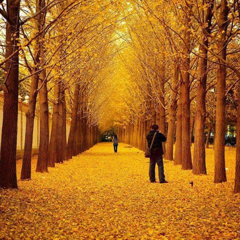 إنسان في فصل الخريف